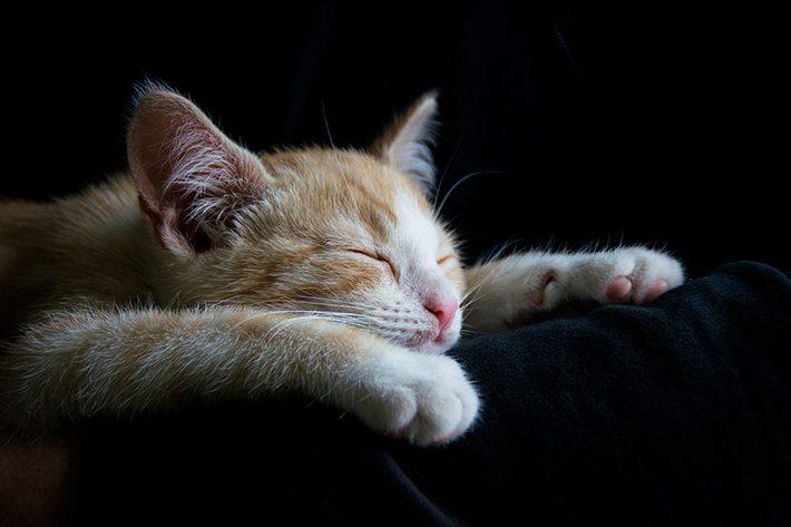 寝ている猫のイメージ画像