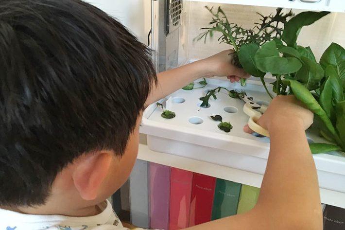 水耕生活を楽しむ子供