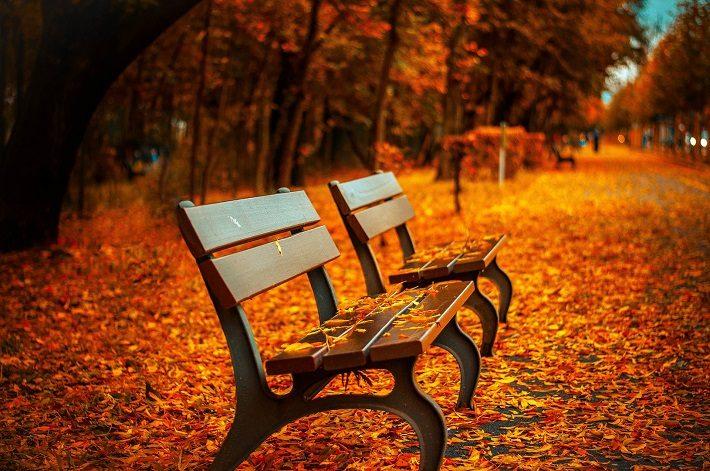 ベンチと秋のイメージ画像
